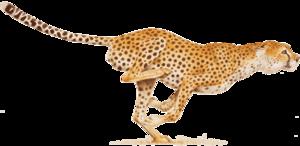 Cheetah PNG Image PNG Clip art