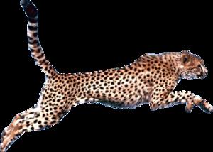 Cheetah PNG Pic PNG Clip art