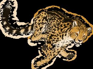 Cheetah PNG Transparent Picture PNG Clip art