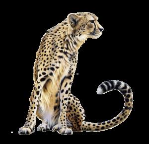 Cheetah PNG Transparent PNG Clip art