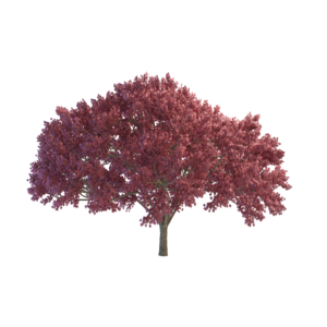Cherry Tree PNG File PNG icon
