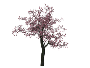 Cherry Tree PNG Image PNG icon