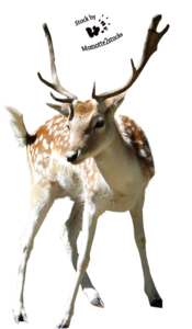 Christmas Deer PNG PNG Clip art