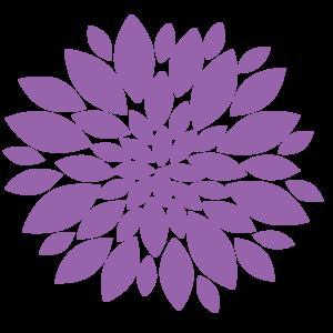 Chrysanthemum PNG Image PNG Clip art