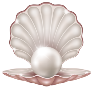 Clams PNG Image PNG Clip art