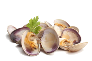 Clams PNG Picture PNG Clip art