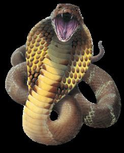 Cobra Snake PNG File PNG Clip art