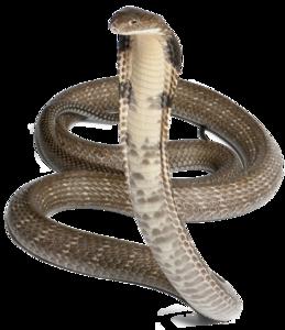 Cobra Snake PNG Pic PNG Clip art