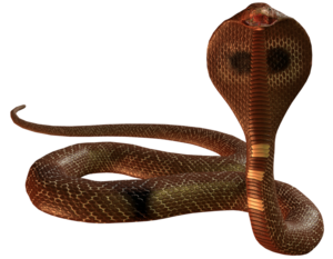 Cobra Snake PNG Picture PNG Clip art