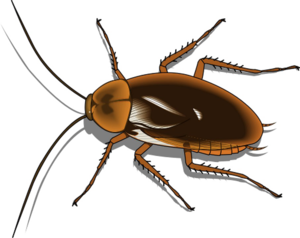 Cockroach PNG Free Image PNG Clip art