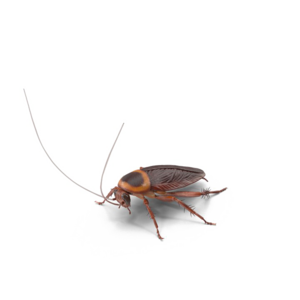 Cockroach PNG Image HD PNG Clip art