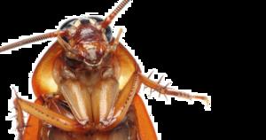 Cockroach PNG Transparent Images PNG Clip art