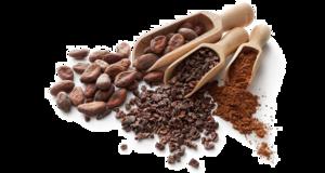 Cocoa Beans PNG HD PNG Clip art