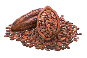 Cocoa Beans PNG Image PNG Clip art