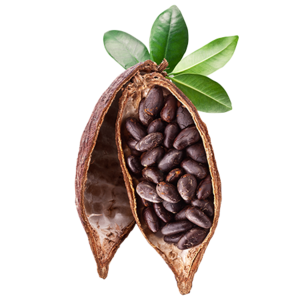 Cocoa Beans PNG Photos PNG Clip art