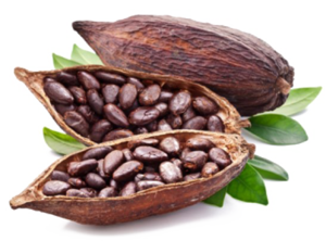 Cocoa Beans PNG Pic PNG Clip art