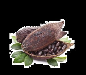 Cocoa Beans Transparent PNG PNG Clip art