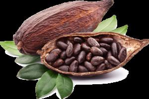 Cocoa PNG Photos PNG Clip art
