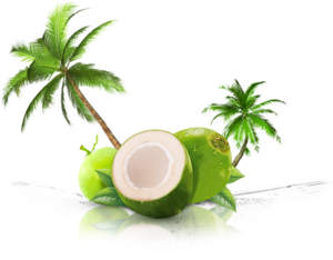 Coconut PNG Background PNG Clip art