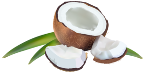 Coconut PNG Clipart Background PNG Clip art