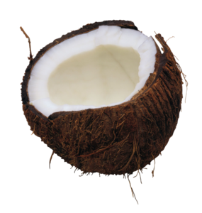Coconut PNG Download Image PNG Clip art