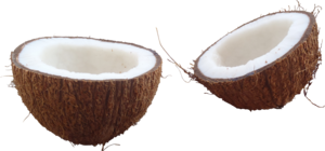 Coconut PNG Image Free Download PNG Clip art