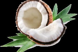 Coconut PNG Transparent File PNG Clip art