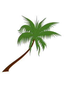 Coconut Tree PNG Free Download PNG icon