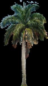 Coconut Tree PNG HD PNG Clip art
