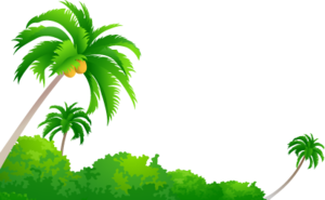 Coconut Tree PNG Image PNG Clip art