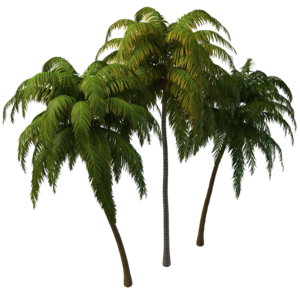 Coconut Tree PNG Photos PNG Clip art