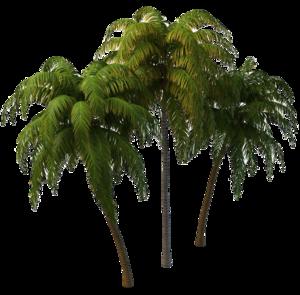 Coconut Tree PNG Photos PNG Clip art