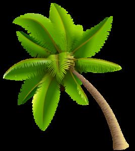 Coconut Tree PNG Transparent Image PNG Clip art