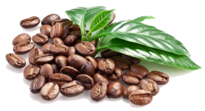 Coffee Beans PNG Image PNG Clip art