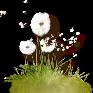 Colored Dandelion PNG File PNG Clip art