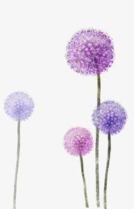Colored Dandelion PNG Photos PNG Clip art