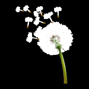 Colored Dandelion Transparent Background PNG Clip art
