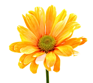 Colorful Flowers PNG Photos PNG Clip art