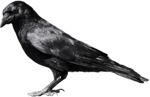 Common Raven PNG File PNG icon