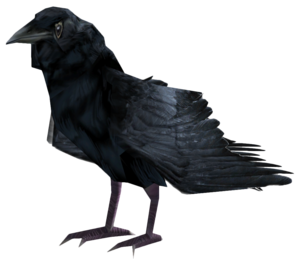 Common Raven PNG Photo PNG Clip art