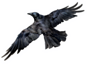 Common Raven PNG Photos PNG Clip art