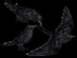 Common Raven PNG Transparent HD Photo PNG Clip art