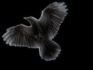 Common Raven PNG Transparent Image PNG Clip art