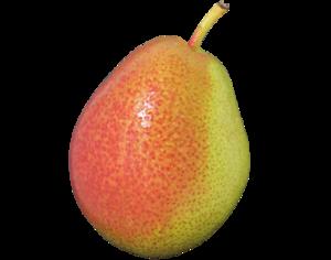 Corella Pear PNG PNG Clip art