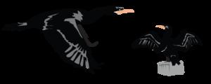 Cormorant PNG Clipart PNG Clip art