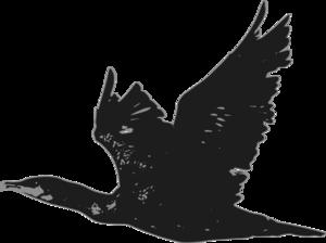 Cormorant PNG File PNG Clip art