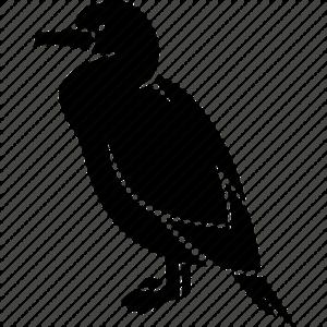 Cormorant PNG Image PNG Clip art