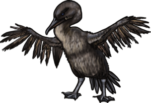Cormorant PNG Photo PNG Clip art