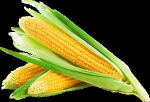 Corn Cob PNG PNG Clip art