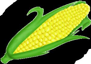 Corn On Cob Clip Art PNG PNG clipart